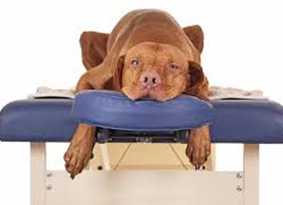 Secrets of a dog masseuse