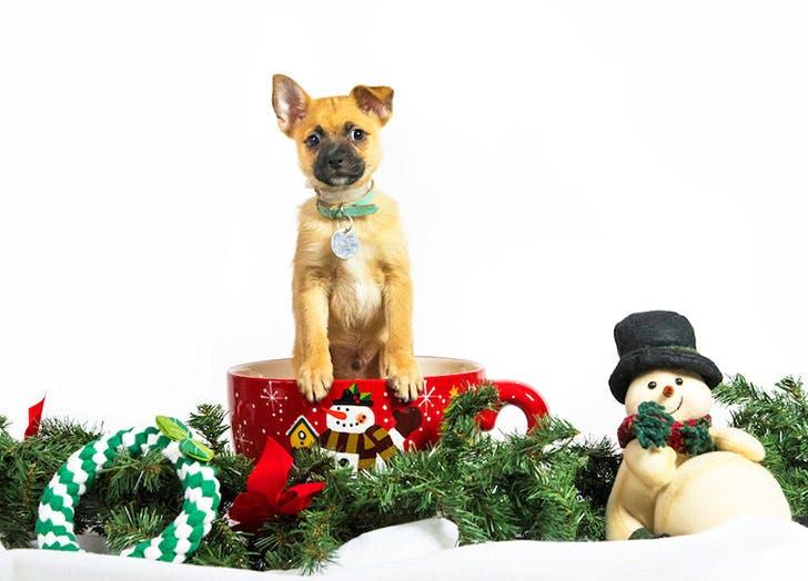 christmas puppy NY 728
