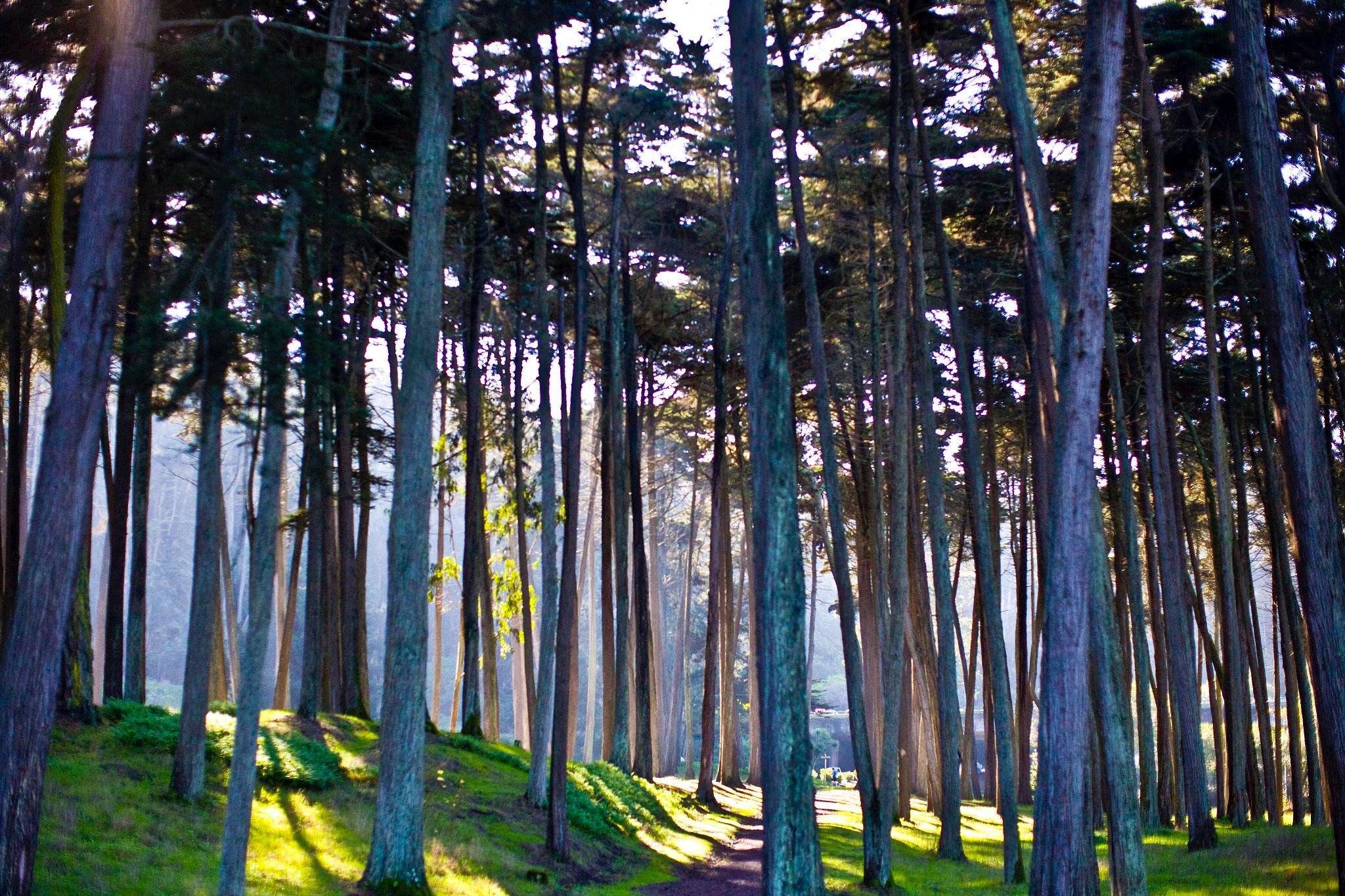 the presidio san francisco beautiful places
