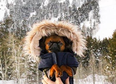 winter dog gear 400