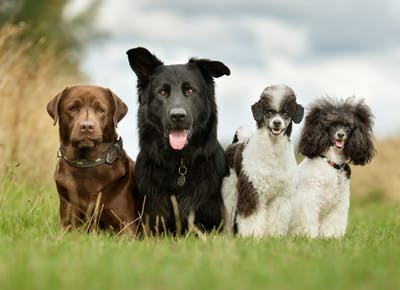 dog breeds msn