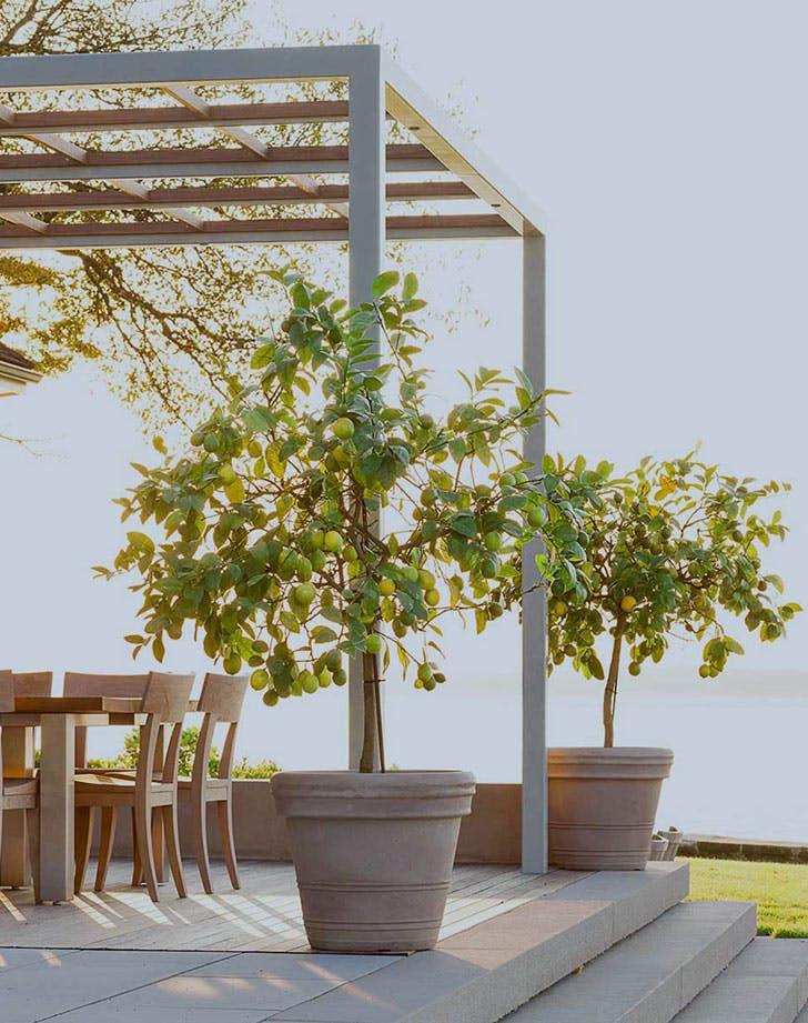 gardentrends6