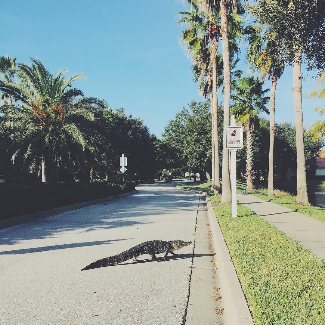 normal in miami gators
