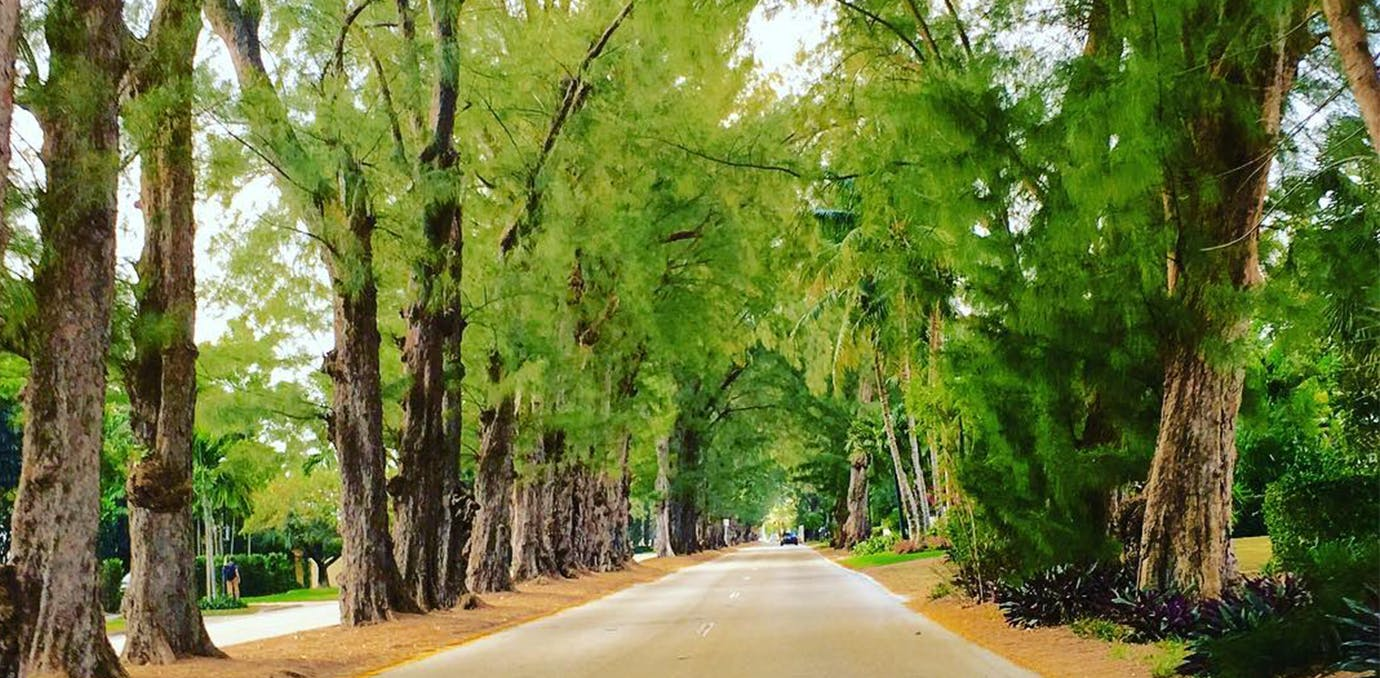 pine tree drive miami beautiful streets WIDE