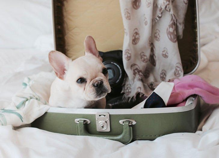 puppy suitcase